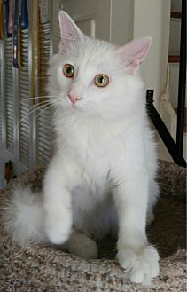 Anton (Adoption Pending)