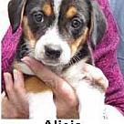 Adopt A Pet :: Adorable Adoptables Alicia/Grace