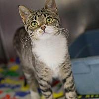 Adopt A Pet :: BUTTERCUP - Johnstown, PA