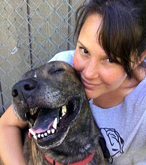 Adopt A Pet :: Zeeb  - Troy, MI