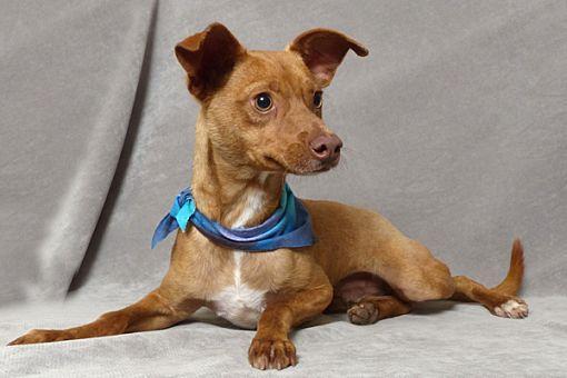 Kerrville Dog Adoption
