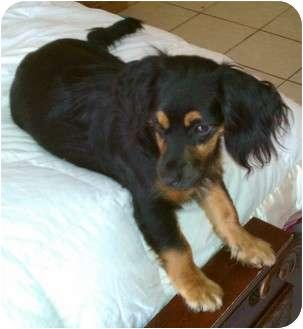 Adoptapet Com Small Dogs