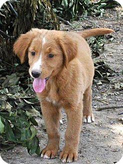 Litchfield, CT - Border Collie  Meet Tamara (Adoption Pending) a Pet