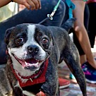 Adopt A Pet :: Martin (Has Application)