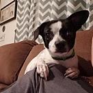 Adopt A Pet :: Maxx
