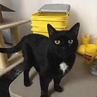 Finding Forever Animal Rescue In Marion Illinois