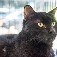 Adopt A Pet :: Lucius - New York, NY