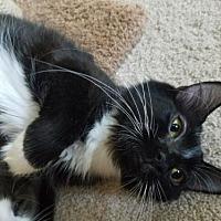 Adopt A Pet :: Ebony 2017 - Alexandria, VA