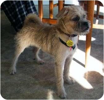 Dog For Adoption In Toronto Ontario