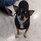 Adopt A Pet :: Donny