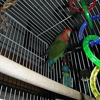 Adopt A Pet :: Jessi - Neenah, WI