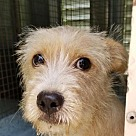 Adopt A Pet :: Pup Simba