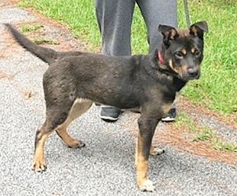 Adopt A Pet :: Raffie  - Camden, SC