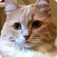 Adopt A Pet :: Otta - Columbia, MD