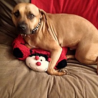 Adopt A Pet :: Moose (COURTESY POST) - Baltimore, MD