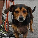 Adopt A Pet :: Roscoe A