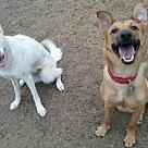 Adopt A Pet :: Calli & Keanu