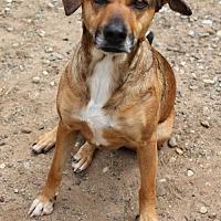Adopt A Pet :: Bleu - Keyport, NJ