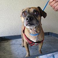 Porterville Animal Shelter in Lindsay, California