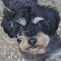 Adopt A Pet :: Eddie - Atlanta, GA
