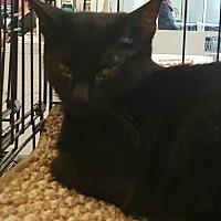 Adopt A Pet :: allie - Lyons, IL