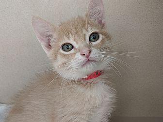 Adopt A Pet :: Garnet  - Laramie, WY