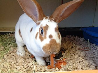 Adopt A Pet :: Tex  - Laramie, WY