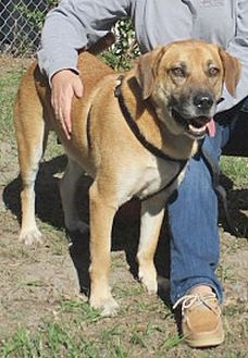 Adopt A Pet :: Perry  - Camden, SC