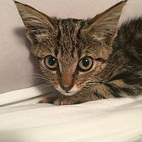 Adopt A Pet :: Goober - Tampa, FL