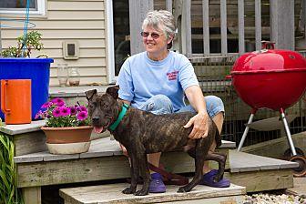Dog For Adoption Madison Wi