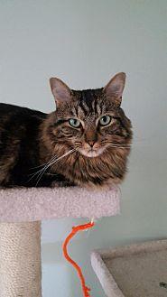 Adopt A Pet :: Murphy  - Blasdell, NY