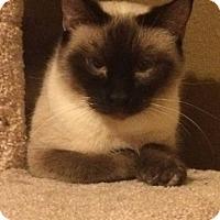 Adopt A Pet :: Carrie - Ogallala, NE