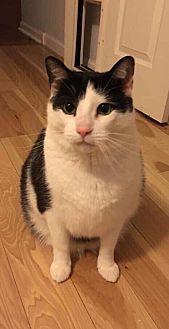 Adopt A Pet :: Spock- COURTESY LIST  - Devon, PA