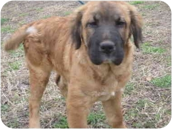 Exeter Nh Golden Retriever Meet Charlie A Pet For Adoption