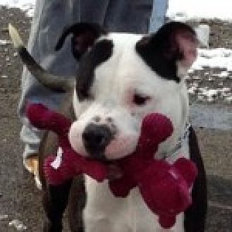 Dog Adoption Medford