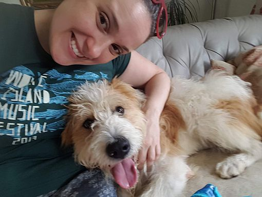 Toronto, ON - Wirehaired Fox Terrier  Meet NOBLE a Pet for