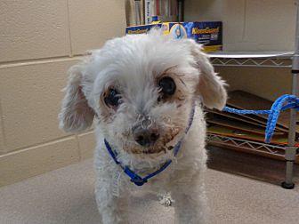Adopt A Pet :: 19-0420  - Laramie, WY