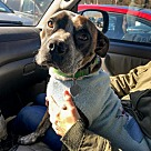 Adopt A Pet :: Mishka