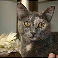 Adopt A Pet :: Channing - St. Cloud, FL