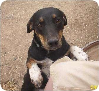 Beagle/Hound (Unknown Type) Mix Dog for adoption in Glenpool, Oklahoma - Hound