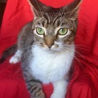 Adopt A Pet :: APRIL - Santa Monica, CA