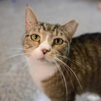Adopt A Pet :: Yarrow - New Freedom, PA