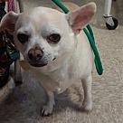 Adopt A Pet :: Marley M