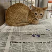 Available pets at Vermilion County Animal Shelter in