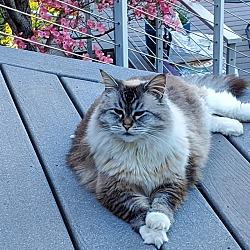 Kittens For Sale In Ashland Oregon Adoptapet Com