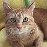 Adopt A Pet :: Calypso - Green Bay, WI