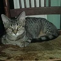 Adopt A Pet :: Addie - Columbia City, IN