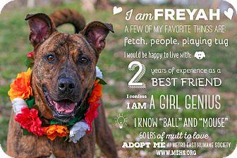 Labrador Retriever/Terrier (Unknown Type, Medium) Mix Dog for adoption in Edwardsville, Illinois - Freyah