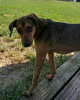 Adopt A Pet :: Tawny  - Mt Vernon, IN