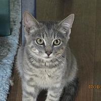 Adopt A Pet :: Jackson - Hudson, NY